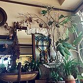 ミラー/レース/キャンドルスタンド/キャンドルホルダー/植物のある暮らし...などのインテリア実例 - 2020-07-15 15:48:23