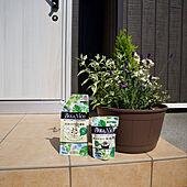 寄せ植え初心者/寄せ植え/BotaNice/虫対策/植物のある暮らし...などのインテリア実例 - 2021-06-15 11:45:19