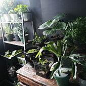 リビング/観葉植物/ベランダ/ガーデニング/DIY...などのインテリア実例 - 2020-07-06 08:48:55