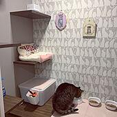 猫の壁紙/イベント参加中/キャットウォーク/猫スペース/リビング...などのインテリア実例 - 2020-04-08 23:09:51