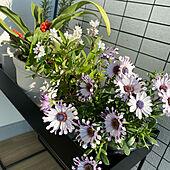 花のある暮らし/ベランダガーデン/癒しの空間/シンプルにすっきりと暮らす/マンション暮らしのインテリア実例 - 2020-04-08 22:29:17