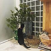 かご/花瓶/お花のある暮らし/緑のある暮らし/多頭飼いの家...などのインテリア実例 - 2020-07-16 01:16:37