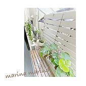 観葉植物/花のある暮らし/庭/ガーデニング/リビングのインテリア実例 - 2021-06-12 22:58:32