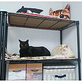 棚/ペットと暮らすインテリア/出来るところはdiy/猫に優しいお家作り/今日はノンたん6歳の誕生日...などのインテリア実例 - 2021-05-02 20:08:09