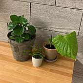 かざり棚/100均/北欧/観葉植物/リビングのインテリア実例 - 2021-05-08 21:12:59