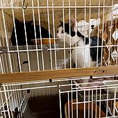 黒猫/保護猫と暮らす/古い一戸建て/ねこと暮らす/多頭飼い始めます...などのインテリア実例 - 2021-06-04 10:32:45