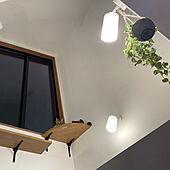 壁/天井/ねこと暮らす/子猫と暮らす/キャットタワー/ねこのいる日常...などのインテリア実例 - 2021-08-06 02:01:14