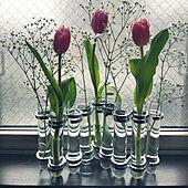 壁/天井/趣味/花のある生活/花のある暮らし/DULTON...などのインテリア実例 - 2021-05-09 08:28:28