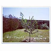 机/シンボルツリー/オリーブ/ルッカ/平屋...などのインテリア実例 - 2021-05-10 07:49:32