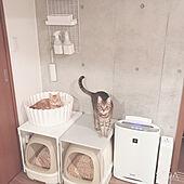 猫スペース/ねこ/コンクリート打ちっ放し/ねこのいる日常/ねこと暮らす...などのインテリア実例 - 2020-04-08 23:32:49