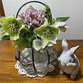季節の花/うさぎ雑貨/白色/クリスマスローズ/庭...などのインテリア実例 - 2021-02-24 10:34:49