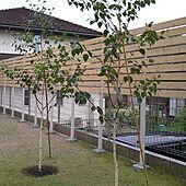 リビング/カーテンを閉めなくても良い庭/庭/ウッドフェンスDIY/ガーデン...などのインテリア実例 - 2021-06-18 04:48:33