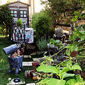 緑のガーデン/コキア/秋色あじさい/花壇 手作り/タイル貼りDIY...などのインテリア実例 - 2021-08-05 07:19:09