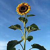 花のある暮らし/かわいいもの♡/RCの出会いに感謝♡/マンション暮らし/今日も見ていただいて嬉しいです✨...などのインテリア実例 - 2021-08-01 17:34:39