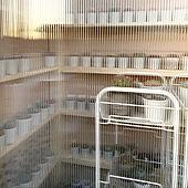 ポリカーボネート/ミルクペイント/2×4材でDIY/多肉棚/多肉棚 DIY...などのインテリア実例 - 2020-11-14 18:36:28