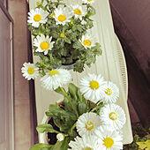 観葉植物/一人暮らし/北欧/花のある暮らし/無印良品...などのインテリア実例 - 2020-04-01 12:59:31