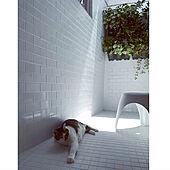 タイル貼り/猫/観葉植物/グリーンのある暮らし/壁面緑化...などのインテリア実例 - 2021-07-18 21:59:28
