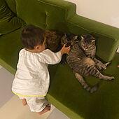 ねこのいる日常/1歳児/ねこと暮らす。/赤ちゃんと猫/ムーンちゃん...などのインテリア実例 - 2021-06-20 20:48:10