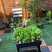 タネまき/DIY/建売住宅/ジフィー/植物のある暮らし...などのインテリア実例 - 2019-05-12 15:43:41