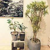 観葉植物/リビングのインテリア実例 - 2021-08-03 21:38:26
