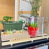 冷凍庫/フェイクグリーン/多肉植物/食虫植物/ジョウロ...などのインテリア実例 - 2021-05-27 18:58:04
