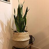 バスケット/IKEA/観葉植物のある暮らし/サンスベリア/かご収納...などのインテリア実例 - 2021-04-19 23:44:05