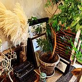 アンダーウッド/アンティーク家具/観葉植物/輸入雑貨/エコカラット...などのインテリア実例 - 2021-05-11 09:16:22
