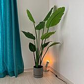 BK home/ナチュラル/ニトリ/観葉植物/フェイクグリーン...などのインテリア実例 - 2021-06-13 07:16:18