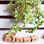 セダムにお花が咲きました♪/多肉棚DIY/ベランダガーデン/住友林業の家/二世帯住宅完全分離型...などのインテリア実例 - 2021-06-14 23:09:00