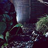 日本家屋/庭/ひかりのベーション/玄関/入り口のインテリア実例 - 2021-07-08 19:32:40