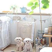 部屋全体/愛犬と暮らす家/セリア/インテリア大好き/雑貨大好き♡...などのインテリア実例 - 2020-08-25 16:29:15
