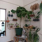 壁/天井/再利用/ペットボトル/コレ、DIYしたよ!/IKEA...などのインテリア実例 - 2021-05-11 16:34:24