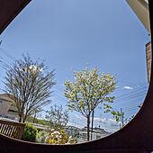玄関/入り口/ハンギングテントのインテリア実例 - 2021-04-18 12:13:16