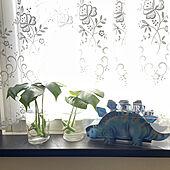 観葉植物/棚のインテリア実例 - 2021-09-19 10:29:41