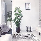 木のある暮らし/海外インテリアに憧れる/植物のある暮らし/リビングのインテリア実例 - 2021-09-21 06:34:49
