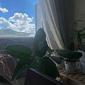 観葉植物/ソファ/リビングのインテリア実例 - 2021-09-18 12:58:48