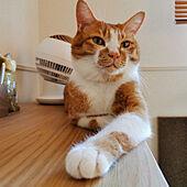 棚/ペットと暮らすインテリア/2LDK賃貸アパート/猫と暮らすインテリア/ねこのいる暮らし...などのインテリア実例 - 2021-09-27 17:45:53
