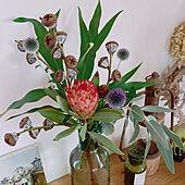 アンティーク/カフェ風/花のある暮らし/植物大好き/花びん...などのインテリア実例 - 2021-07-24 20:31:02