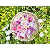 花のある暮らし/庭/ガーデニング/玄関/入り口のインテリア実例 - 2021-09-22 16:16:29