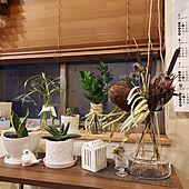 部屋全体/お気に入りのカラー/心地よい暮らし/観葉植物初心者/いいね!&フォローとっても嬉しいです♡...などのインテリア実例 - 2021-06-13 21:38:31