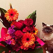 猫と暮らす/一人暮らし/生花のある暮らし/猫/机のインテリア実例 - 2020-04-10 04:31:46