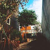 玄関/入り口/DIY/ガーデニングのインテリア実例 - 2021-04-10 23:40:53