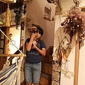 壁/天井/塗り壁/ハンギンググリーン/スワッグ/犬と暮らす...などのインテリア実例 - 2021-09-16 19:30:46