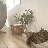 猫とインコと共に暮らす家/salut!/フェイクグリーン/ブラインド/雑貨...などのインテリア実例 - 2021-05-03 06:31:07