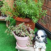 ガーデン雑貨/植物のある暮らし/ガーデニング/お花のある暮らし/玄関前...などのインテリア実例 - 2021-06-13 09:40:37