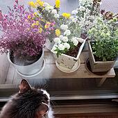 机/花のある暮らし/ベランダガーデニング/小さなガーデニングコーナー/ベランダガーデン...などのインテリア実例 - 2020-04-05 23:24:01