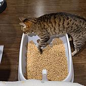 ベッド周り/猫トイレ/ねこのいる日常/ねこと暮らす。/ニャンとも...などのインテリア実例 - 2021-06-19 09:05:39