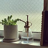 グリーンのある暮らし/多肉植物/コンクリート鉢/スリーコインズ雑貨/ビールホップ...などのインテリア実例 - 2021-04-18 00:17:52