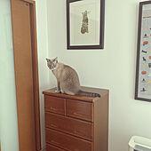 二階/戸建て賃貸/猫と暮らす/3階建/ダイニングのインテリア実例 - 2020-10-22 10:51:27