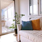 シンプルな暮らし/シンプル/シンプルインテリア/観葉植物/IKEAのクッションカバー...などのインテリア実例 - 2021-02-26 20:05:09
